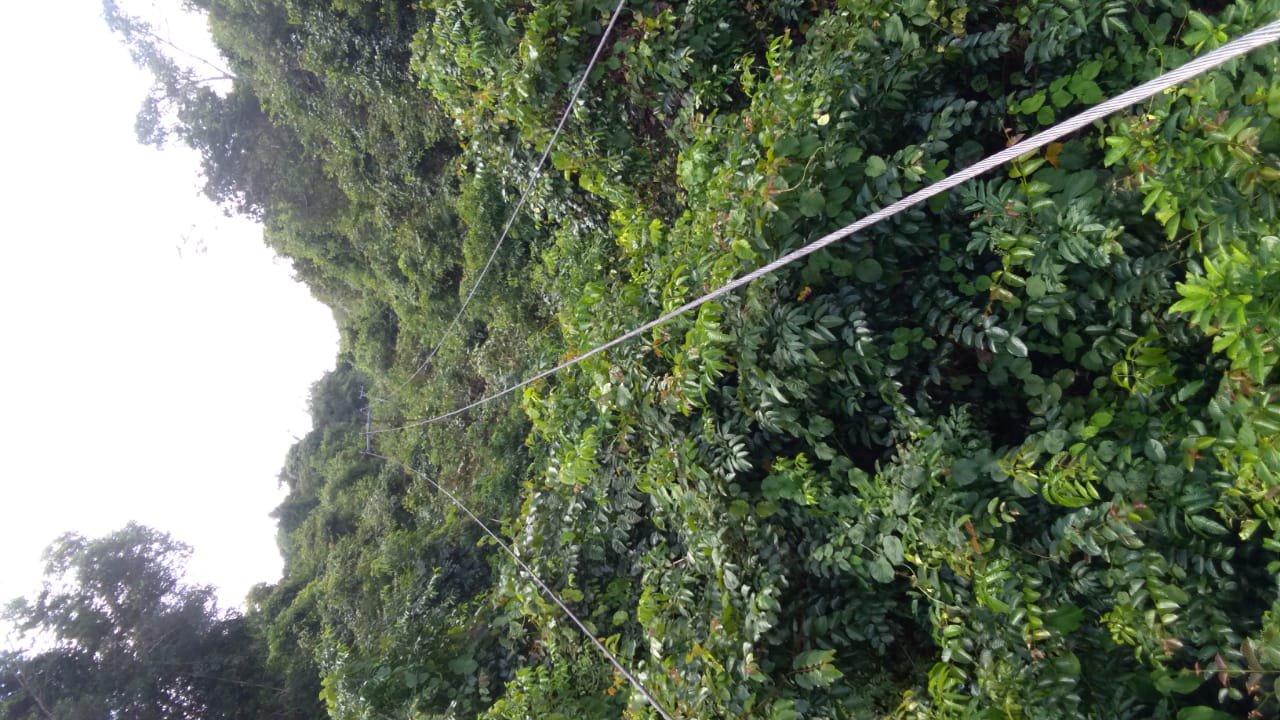 Jalur Kabel Listik Desa mulai tertutup Hutan.